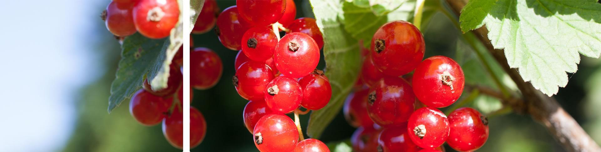 Frische Kräuter und Beeren aus dem eigenen Garten