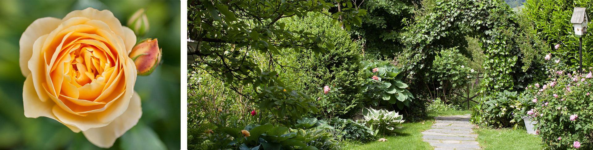Blick in den Garten des Rosenecks mit viel Grün und Blumen