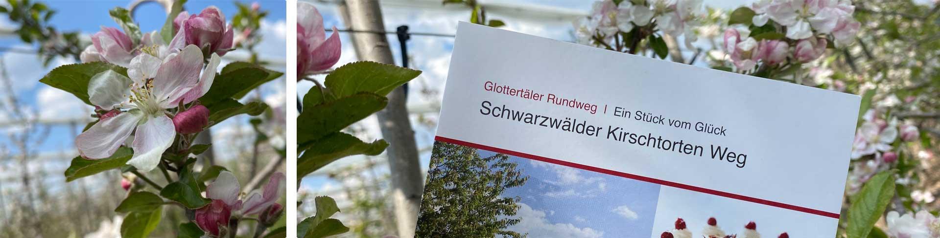 Flyer vom Schwarzwälder Kirschtorten Weg mit Kirschblüten im Hintergrund