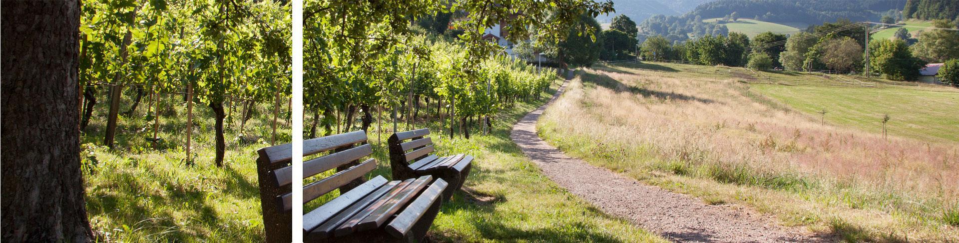 Genießen Sie das Glottertal bei einem Spaziergang entlang dem Winzerpfad
